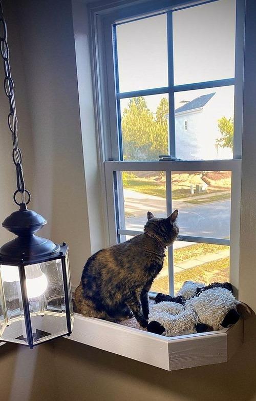 猫に窓までのブリッジ01