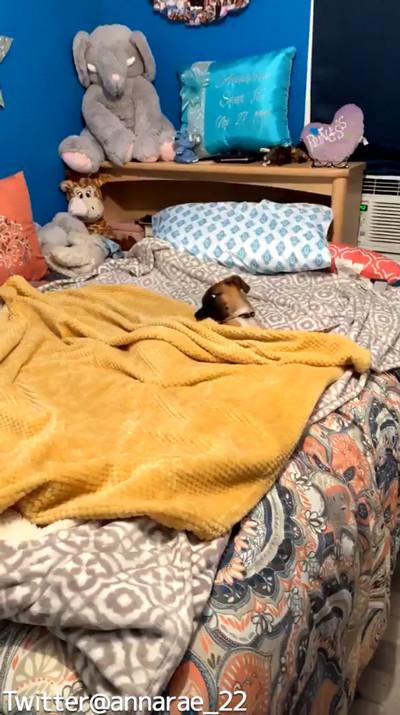 自分で毛布を掛けられるワンコ01