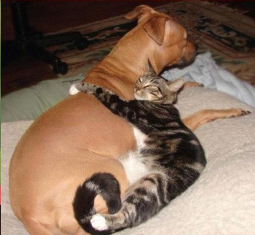 猫を飼った時の理想と現実09
