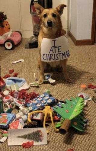 独りのクリスマス15