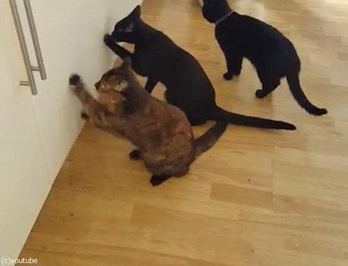 猫2匹が戸棚を連打01