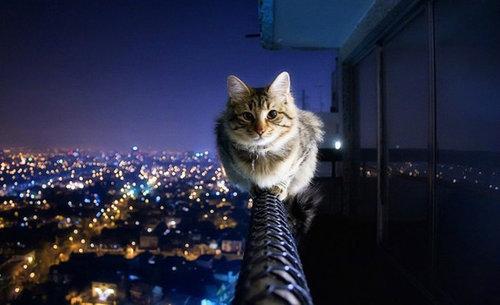 バランス猫20