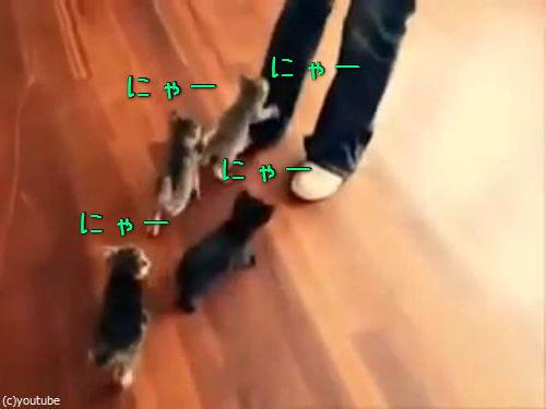 6匹の子猫00