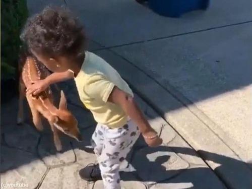 鹿の赤ちゃんが人間の赤ちゃんと出会った00