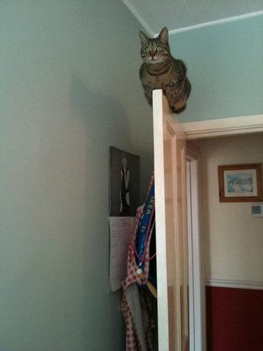 バランス猫09