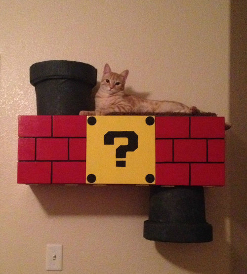 スーパーマリオな猫の遊び場11