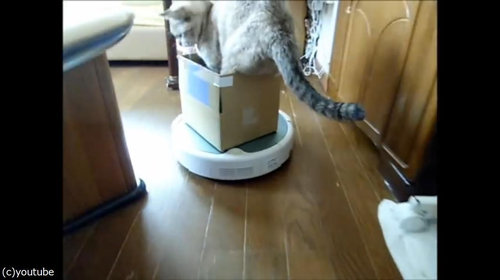 ルンバを乗りこなす猫04