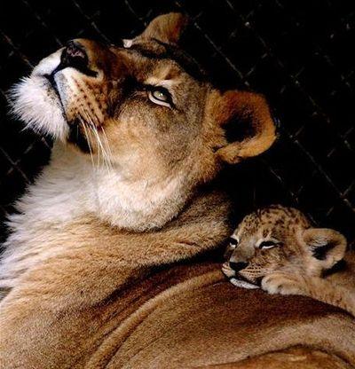 親子愛であふれる動物たち07