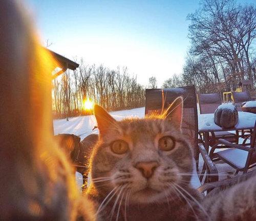 犬たちと一緒に自分撮りをする猫01