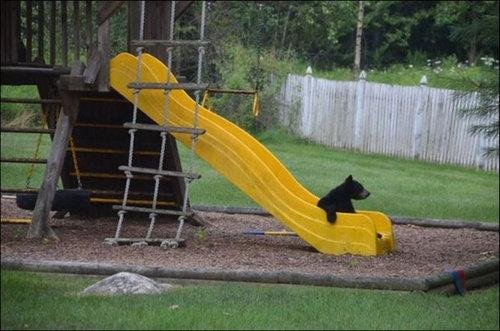 裏庭で遊ぶクマ03