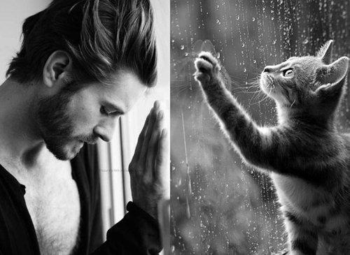 猫が人間の男よりも魅力的な理由15