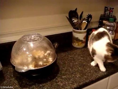 猫とポップコーン03