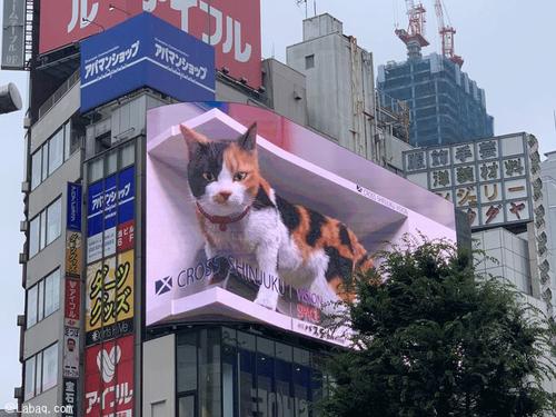 新宿の3D猫00