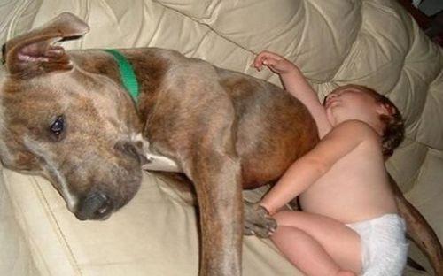 ペットと睡眠10