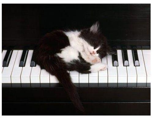 眠る猫06