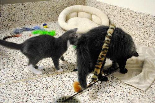 盲目の猫を黒猫が世話05