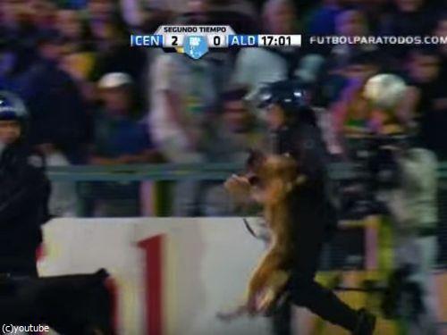サッカーと警察犬05