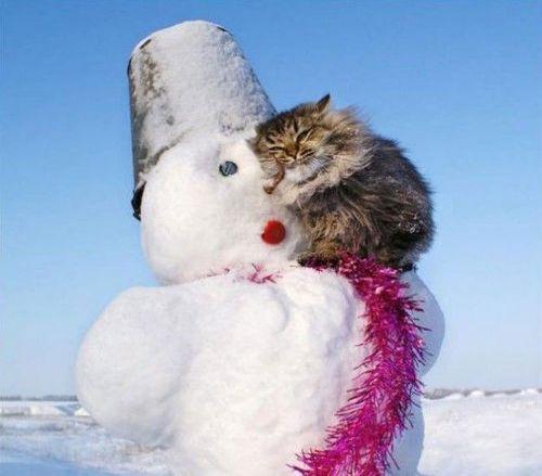 雪なんてへっちゃらな猫11
