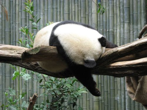 動物園に行ったらみんな寝ていた00