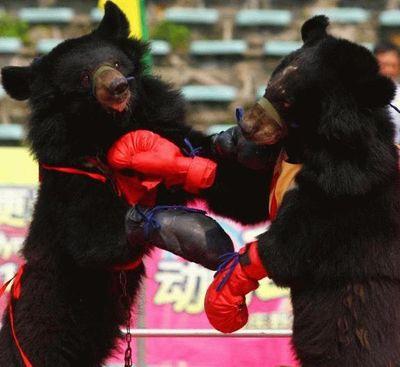 クマが釣られたり戦ったりあられもない格好したりする画像03