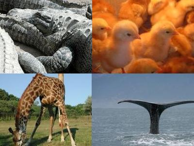 動物の秘密