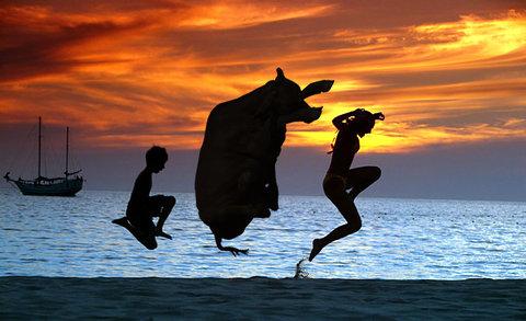 牛のジャンプ力を24