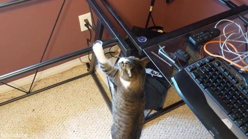 お気に入りの机の天板を外されて困惑する猫04