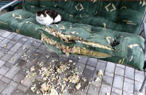 猫を飼った時の理想と現実14
