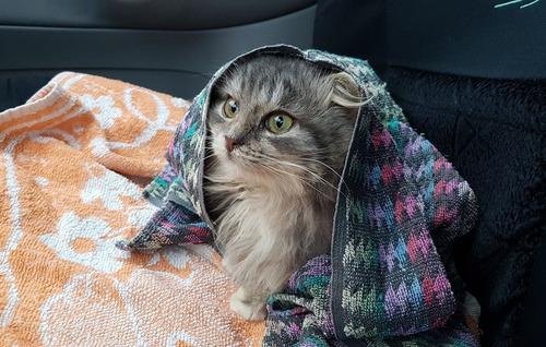 ロシアで凍り付いた猫05