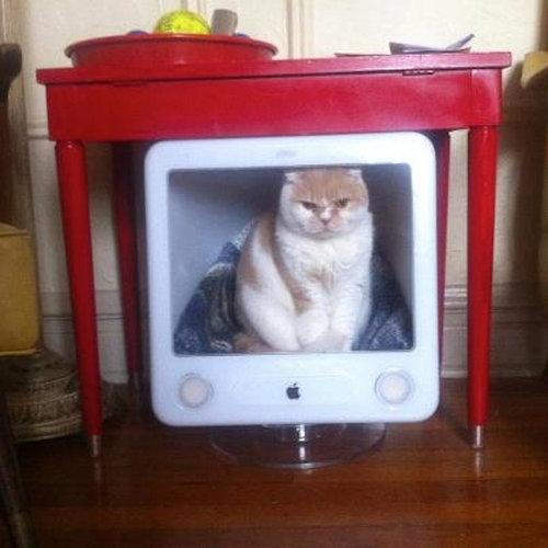 iMacと猫14