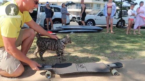 スケーター猫がギネス記録達成01