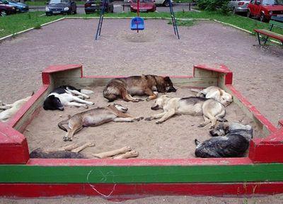 寝てる犬08
