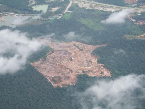 違法の森林伐採00