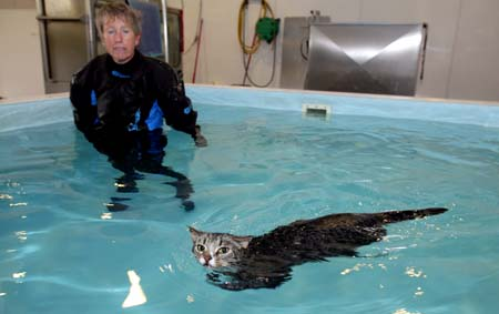 泳ぐ猫01