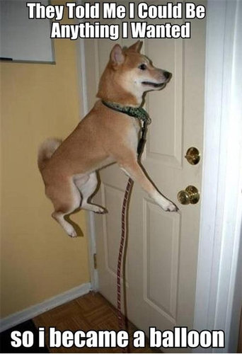 柴犬を飼う理由25