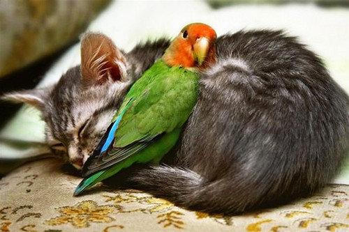猫らしくない猫たち02