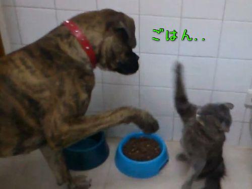 猫にご飯を奪われた犬00