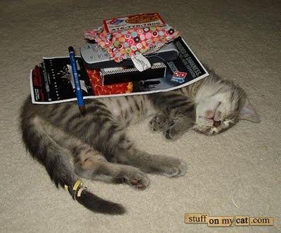 埋没する猫たち01
