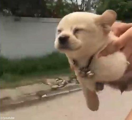 空飛ぶ子犬04