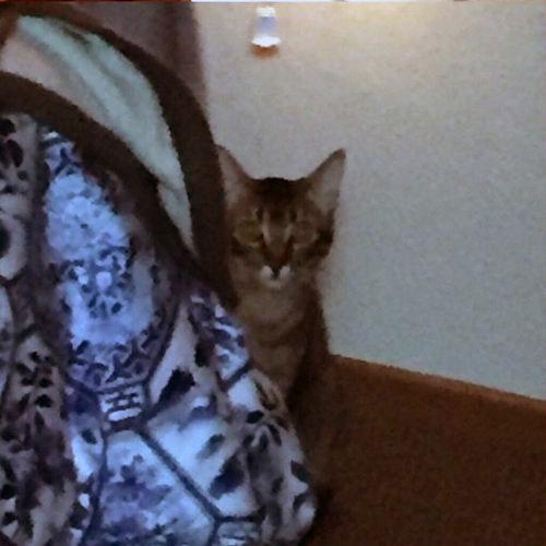 姉の猫に見られてる03