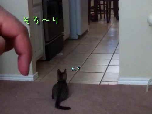 気配に気づく子猫