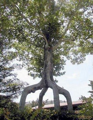 世界の奇妙な木07