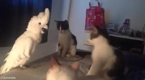 オウム猫02