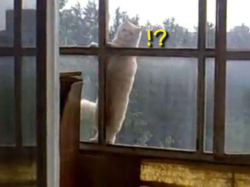 窓から隣の猫がやってきた