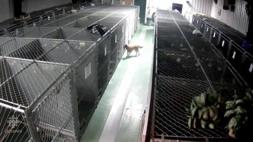 「ペットホテルから犬が脱走した理由」02