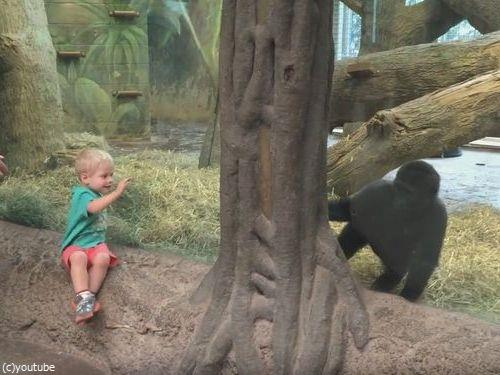 ガラス越しに人間の子供とゴリラの子供が遊ぶ02