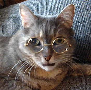 メガネ猫01
