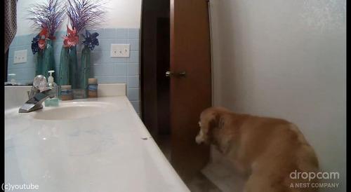 花火が怖い犬がバスルームでやり過ごす01