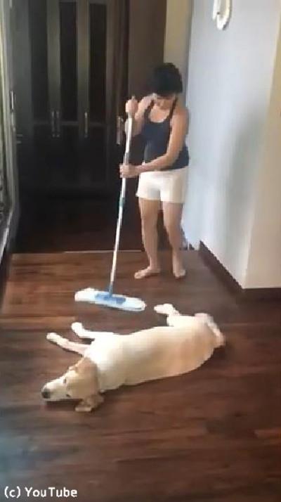 「暑くて動けません…」お掃除を邪魔するワンちゃん02