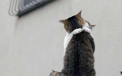 愛し合い猫02